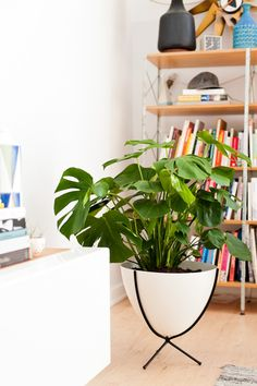 Planter Banter: 4 Tips for Finding the Perfect Plants (and Planters) for your Home - Paper and Stitch Living Room Modern, Home And Living, Perfect Plants, Organic Modern, How To Make Diy, Plant Decor, Home Decor Inspiration, My Room, Interior Decorating
