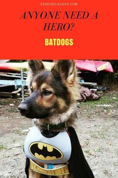 Batdog German Shepherd Dressed Like Batman Dog Germanshepherd Barkinglaughs