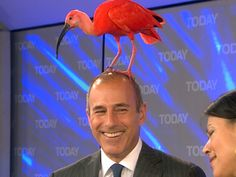 Priceless (if it had only shat, THAT would be a photo ) Matt Lauer, NBC Today Show