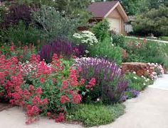 Xeriscaping does not mean 'zero-scaping'. This is a great picture of an established xeric garden. There are a multitude of plants that are considered xeric that still have beautiful foliage and blossoms. Some of these plants even bloom several times during the year.
