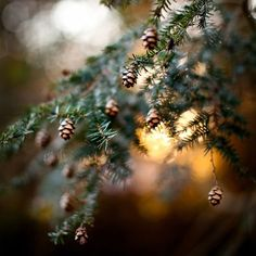 Sleeps Until Christmas, Instagram Images, Instagram Posts, Dandelion, Christmas Tree, Photo And Video, Holiday Decor, Flowers, Plants