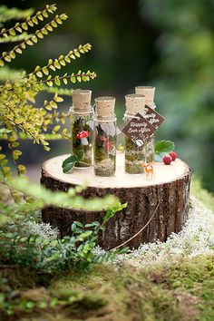 Faerie Terrario Wedding Favors consigue Woodland La Dicha del favor de Evermine {www.evermine.com}