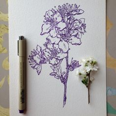 Flowers in Progress A beautiful series of illustrations by Noel Badges Pugh (5)…