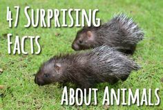 47 Surprising Facts About Animals