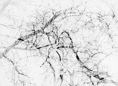 Harry Callahan /// Multiple exposure tree, Chicago, 1956