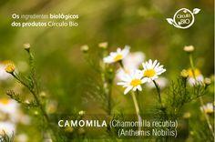 O óleo de Camomila é um dos óleos mais suaves, adequado para bebés e crianças. Pode ser utilizado pelas suas propriedades calmantes e anti-inflamatórias. É benéfico para a pela seca, sensível e alérgica. Chamomile - a gentle oil suitable for babies and children. It can be used for its skin soothing, calming and anti-inflammatory properties.