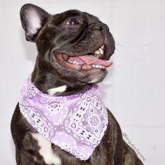 Bom dia para quem esta curtindo o feriado em grande estilo   ________________________________________ #9gag #loveabully #frenchiegram #petmodel #instagramdogs #bullieslife #ilovefrenchies #instapup #dogmodel #frenchielife #dogsofinstaworld #igdogs #aumigosdoig #bullyinstafeature #bullyinstagram #frenchies1 #thefrenchiepost #frenchiephotos #ig_bullys #bullypics #batdogs #doglovers #frenchielove_feature #bulldogfrances #rolldoggang #lillypetsfriends #evabullfriends #followme #vempramatilhags…