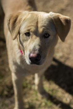 SAFE I'm looking for my loving home and my family :)Melody is ready for her forever home. :)