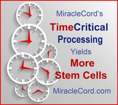 MiracleCord's TimeCritical Processing Yields More Viable Stem Cells. MiracleCord.com/time-critical-processing.html # morestemcells