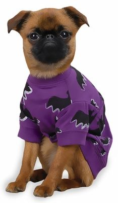 "Zack & Zoey Halloween Bat Tee Purple - XL (24"")"