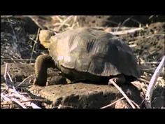 Turtles, terrapins and tortoises are all in one order, called the Testudines. They all have a shell, though only certain species can withdraw their lead and limbs into it.   Find out the difference between Turtles and Tortoises with this documentary.  See: https://www.youtube.com/watch?v=osyfiyEQT3Y&list=UUvpGjOmkHbXM9oezMnw31xA