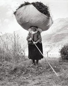 Pepi MERISIO :: Haying in Cogne, Aosta, Italy, 1959