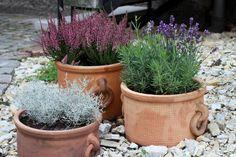 Gravel Landscaping, Gravel Garden, Garden Pots, Lavender Potted Plant, Lavender Garden, Small Courtyard Gardens, Back Gardens, Heather Plant, Growing Lavender