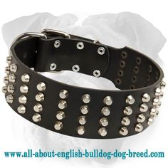 Riveted #Leather #English #Bulldog #Collar with Studs $59.90 | www.all-about-english-bulldog-dog-breed.com