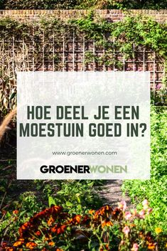 Garden Seeds, Edible Garden, Vegetable Garden, Garden Plants, Growing Gardens, Growing Herbs, Gardening For Dummies, Gardening Tips, Garden Solutions