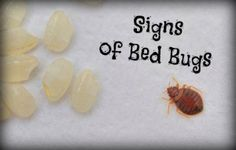 1000 Ideas About Bed Bugs Treatment On Pinterest