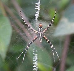 1000 images about spider terminaters on pinterest for How to get rid of spiders in the house uk