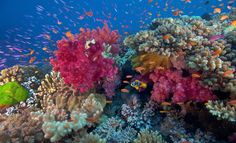 The scuba diving and snorkeling off the islands of Vanua Levu and Taveuni is simply world-class.  #fiji