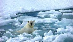 Calentamiento global será constante de ahora en adelante