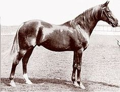 Bend Or (1877–1903) was a British Thoroughbred racehorse who won the 1880 Epsom Derby.  Bend Or was twice the leading broodmare sire in Britain. Bend Or's important immediate descendants include The Tetrarch, Phar Lap & Man o' War. Bend Or had white flecks on his chestnut coat, & like his damsire Thormanby, had black spots on his neck, shoulder, & on his quarters. These markings often showed up in his progeny & is referred to as Bend Or spotting.