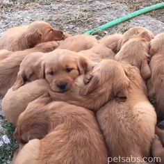 Things that make you go AWW! Like puppies, bunnies, babies, and so on. A place for really cute pictures and videos! Cute Dogs And Puppies, I Love Dogs, Pet Dogs, Dog Cat, Doggies, Cute Little Animals, Cute Funny Animals, Funny Dogs, Beautiful Dogs