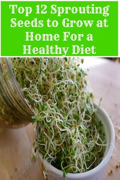 Top 12 Sprouting Seeds to Grow at Home for a Healthy Diet