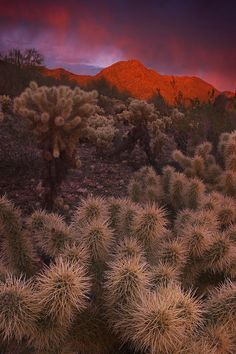 Sonoran Desert, Tucson Mountain County Park, Arizona AZ has a lot of orange in…