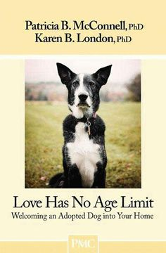 Love Has No Age Limit - Welcoming An Adopted Dog Into Your Home
