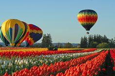 Wooden shoe tulip festival http://www.woodenshoe.com/