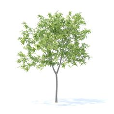 Buy Peach Tree Model by CGAxis on Peach Tree model. Height: Compatible with max 2010 or higher, Cinema and many more. Landscape Design Software, Landscape Materials, Architecture Collage, Architecture Graphics, Architectural Trees, Perspective Drawing Lessons, Tree Plan, Tree People, Ivy Plants