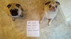 Pudge and Griff.....Guilty as charged!