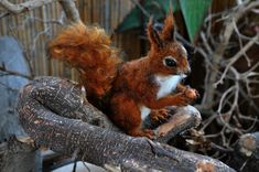 Hey, I found this really awesome Etsy listing at https://www.etsy.com/listing/53344929/needle-felted-wool-animal-red-squirrel