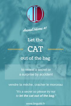 """Animal idiom: """"Let the cat out of the bag"""" 😺 LinguiLD /Idioms/ (Design by LinguiLD)"""