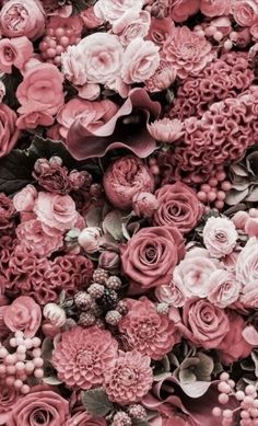 Imagem de flowers, rose, and pink