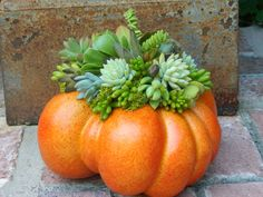 This clever use of succulents and a pumpkin is so striking and unusual! I love the use of a pumpkin as a natural container!