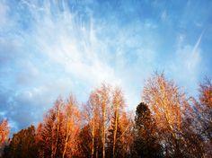 Golden autumn 🍂🍁