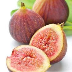 Ficus carica Brown Turkey Echte Feige Feigenbaum süße leckere Früchte im Topf