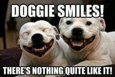Dogie smile ♥ amazing