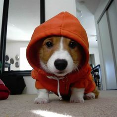 #pint it#Dog Hoodie#cute#small