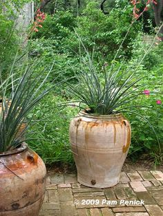 red yucca landscaping - Google Search