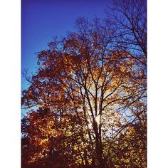 #fall #autumn #onlyinmn #exploremn  (at Despres Home / Photography Office)
