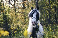 #pferde  #horses #equestrian #equine #pferdefotografie #pferdeschönheiten #pferdeliebe #horselove #equineart Liberty, Horses, Animals, Political Freedom, Animales, Animaux, Freedom, Horse, Animal Memes