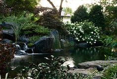 Devote: Water Garden, Koi Pond, Lily Pool & Water Feature Design