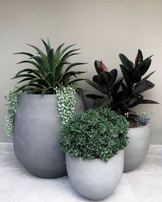 Photo shared by Exotic Nurseries on May 2020 tagging and Image may contain: plant Garden Spaces, Balcony Garden, Garden Pots, Garden Club, Rain Garden Design, Japanese Garden Design, Outdoor Planters, Planter Pots, Courtyard Landscaping
