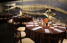 John would love this for the wedding,lol. complete with dinosaurs and whales!