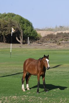 Wild horses on Oranjemund Golf course Brown Hyena, Homing Pigeons, German Police, Ostriches, Diamond Mines, Best Kept Secret, Modern Buildings, Wild Horses, Great View