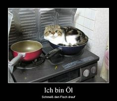 I am oil, throw the fish on it - Lustige Tiere Hund - Animals And Pets, Funny Animals, Cute Animals, Funny Cat Memes, Dog Memes, Crazy Cat Lady, Crazy Cats, I Love Cats, Cute Cats