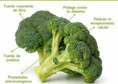 1. Protege el corazón 2. Beta caroteno, selenio y vitamina C (envejecimiento prematuro)  3. Zinc ( protección próstata) 4. Ácido fólico (embarazo) 5. Hierro (anemia) 6. Calcio ( menopausia) 7. Previene del cáncer  8. Protector del sistema inmunológico 9. Alto contenido en fibra (colon) 10. vitamina K ( circulación sanguínea) 11. Barrera frente a los daños cardiovasculares derivados de la diabetes.  12. Vitamina A ( uñas, piel, cabello)  ¿Sabías de los beneficios del brócoli? :)
