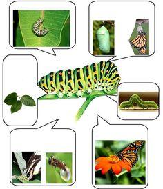 Montessori Science, Preschool Science, Easy English Grammar, Animal Activities, Farm Activities, Art Drawings For Kids, Animal Facts, Montessori Materials, Very Hungry Caterpillar