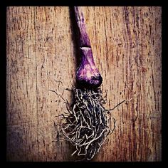 Garlic - Photo from the Instacanvas gallery for lunaraye.